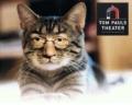 Bühne - Alles für die Katz